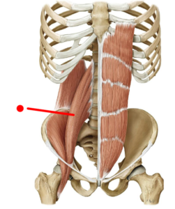 psoas-muscle